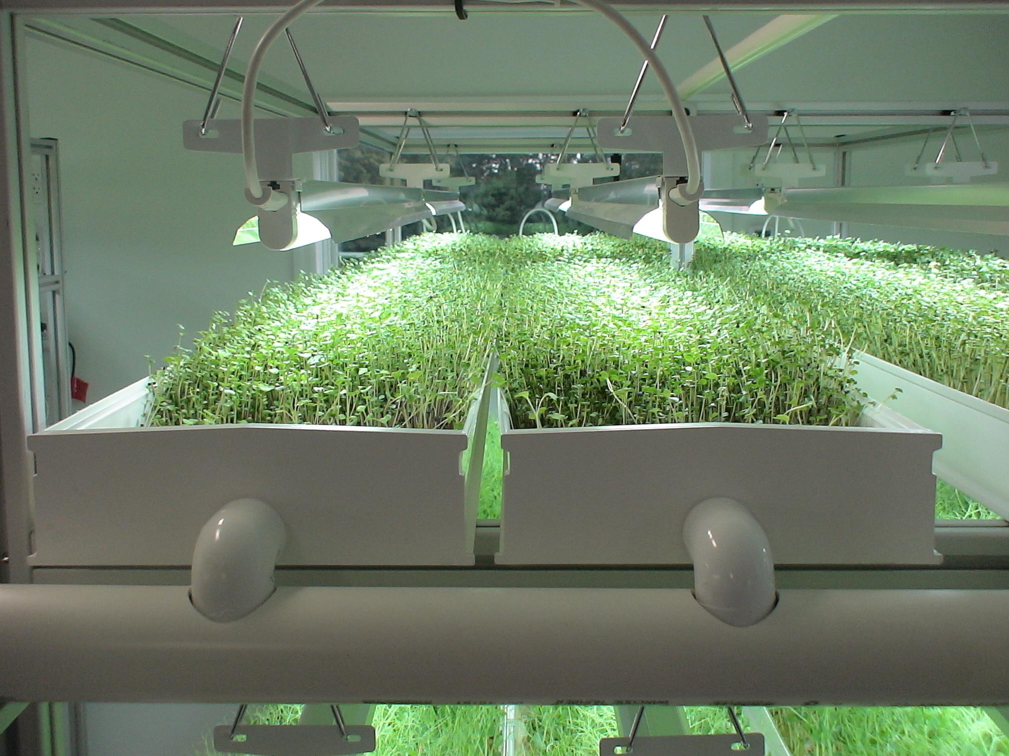 Гидропонная установка для выращивания зелени дома: сборка и 24